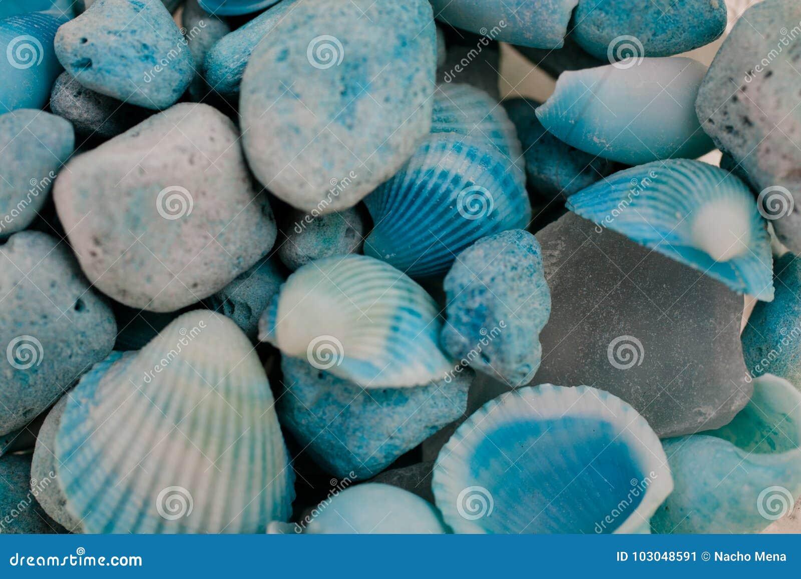 Macro vue des coquillages Fond de Seashell Texture des coquillages bleus