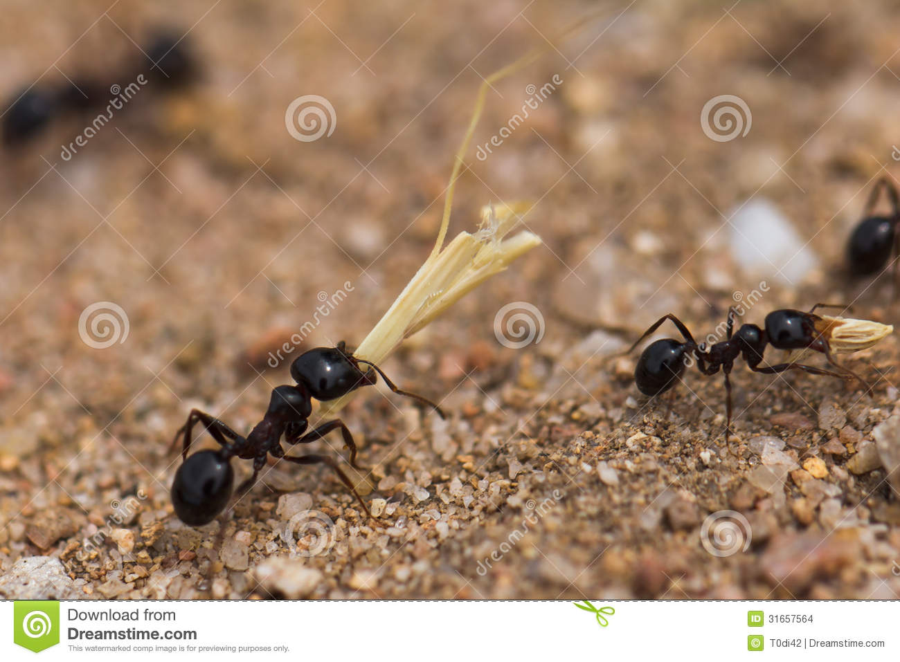 Working ants - photo#21
