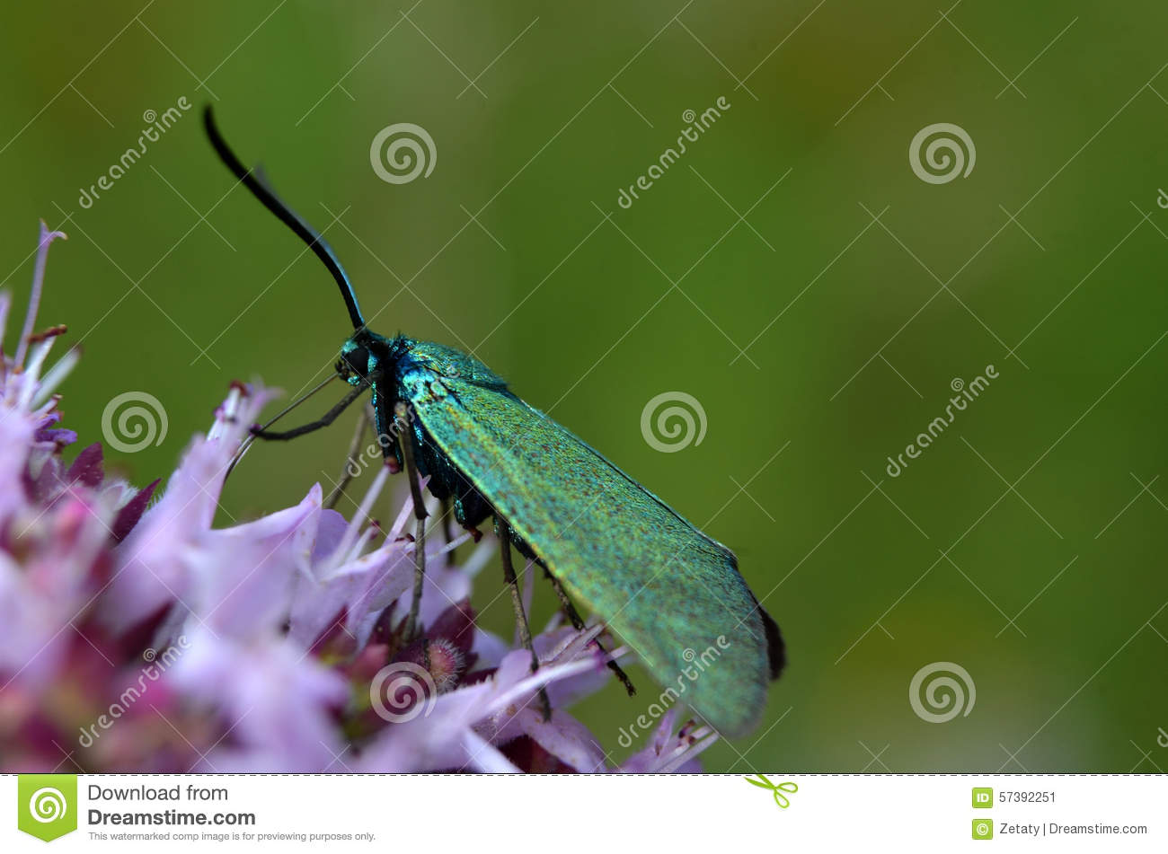 Macroinsect