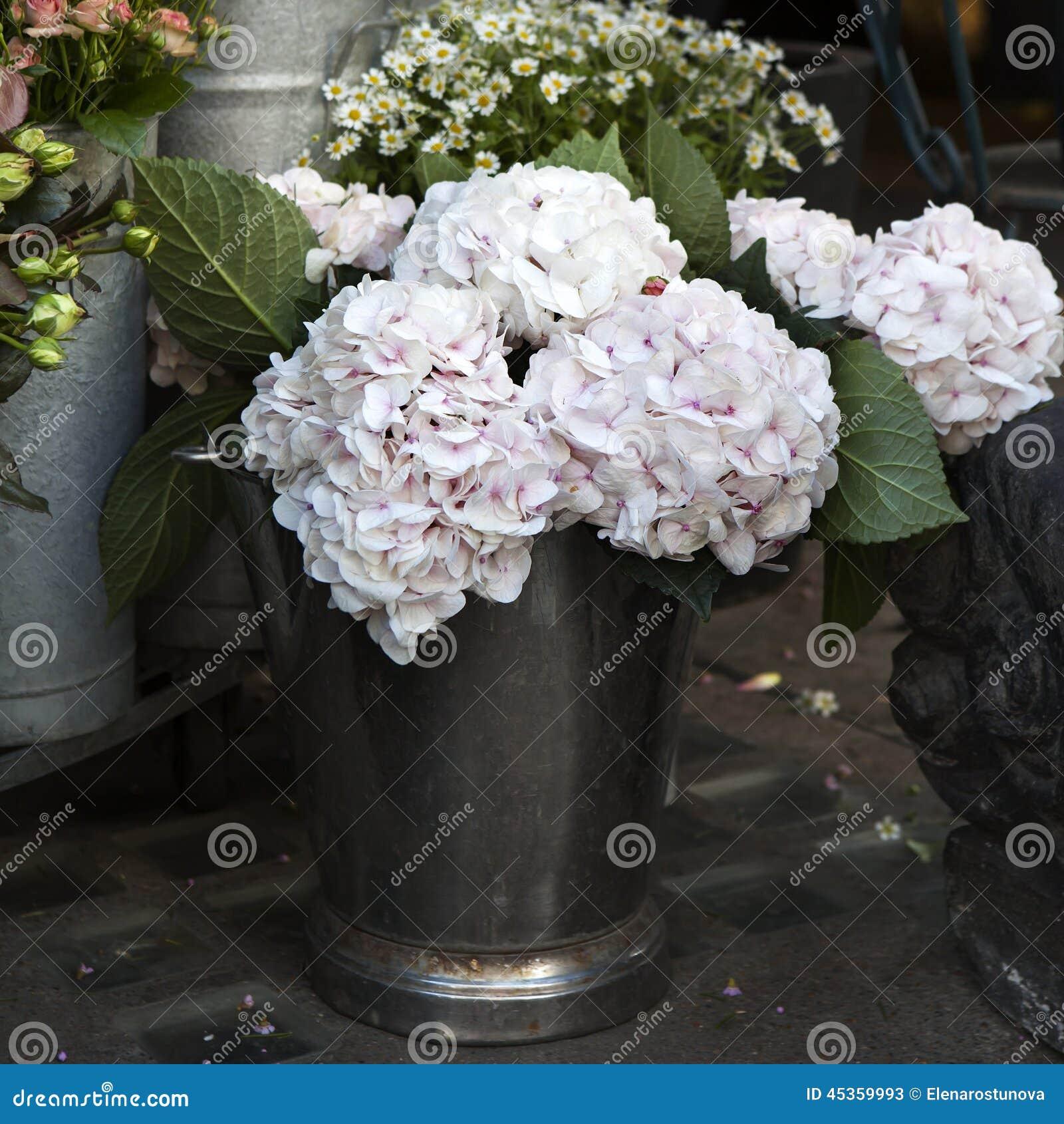 Macrophylla blanc et rose d hortensia