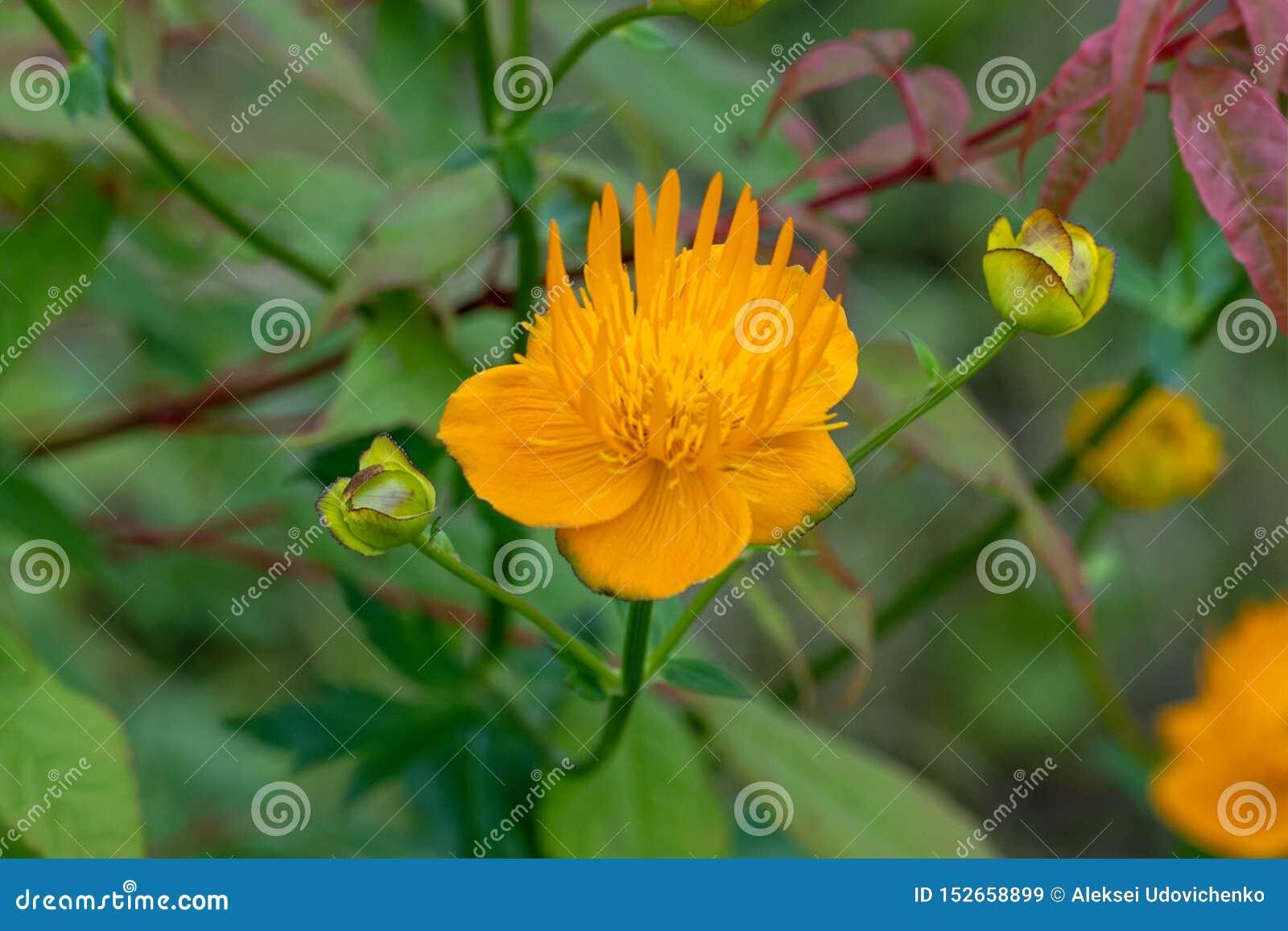 Macroschot van oranje bloemen in een zachte nadruk