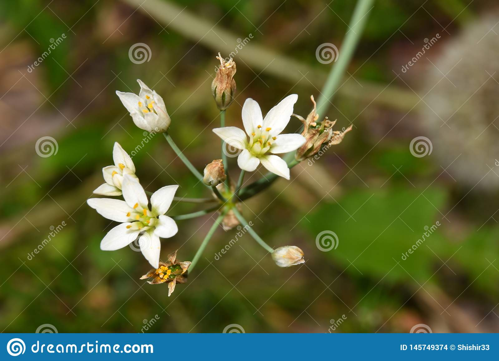 Macrospruit van bloemen die in mijn tuin, zijn close-upschot groeien