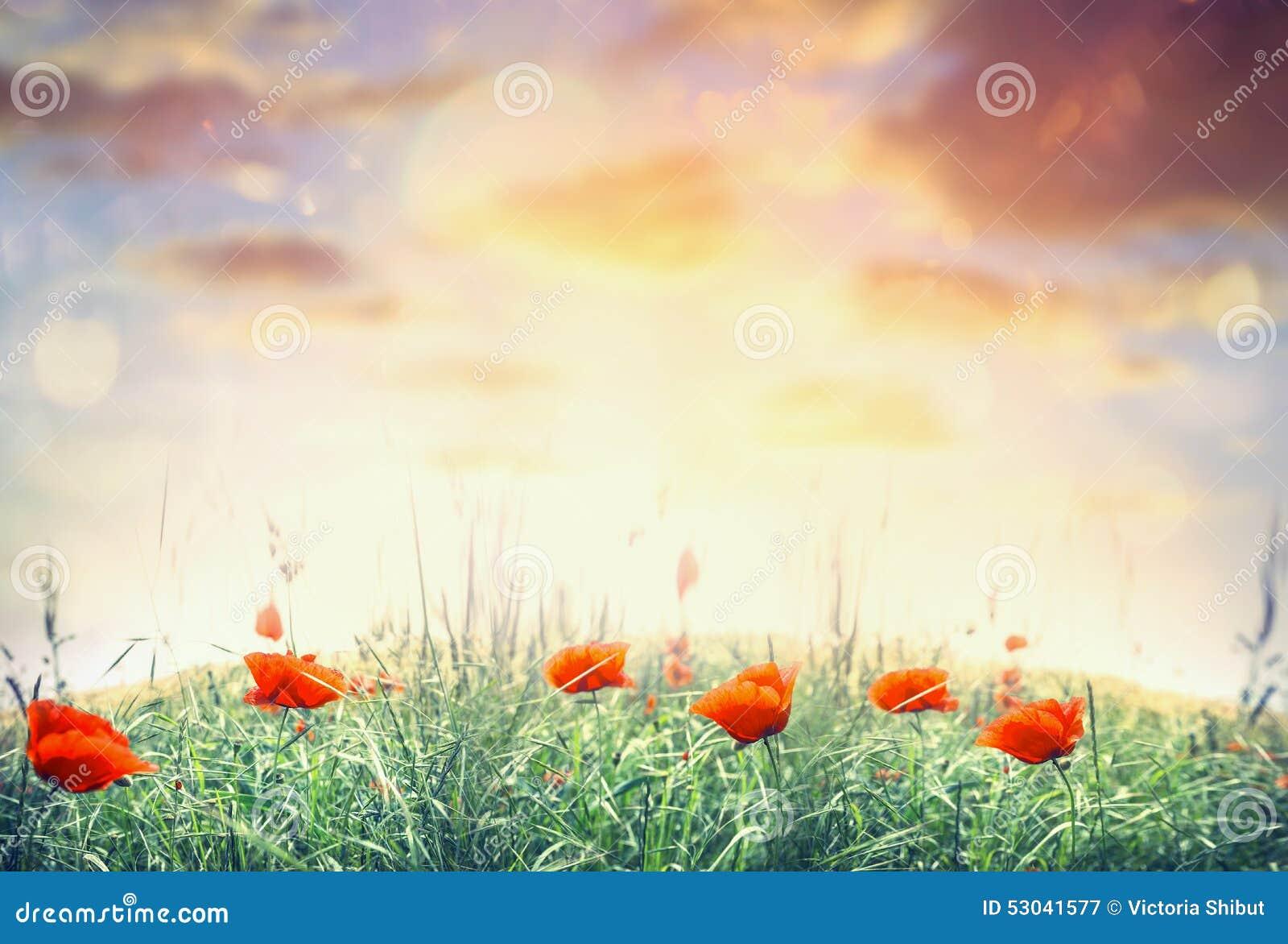 Maczka pole nad zmierzchu niebem, natury krajobrazowy tło