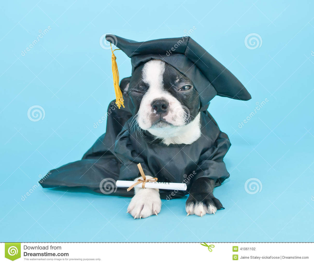 Mad Graduation Puppy stock photo. Image of puppy, expression - 41061102