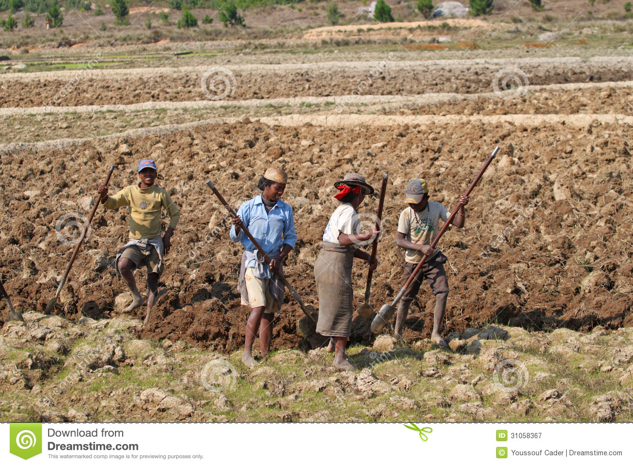 Madagascar editorial photography image 31058367 - Gardening works in october winter preparations ...