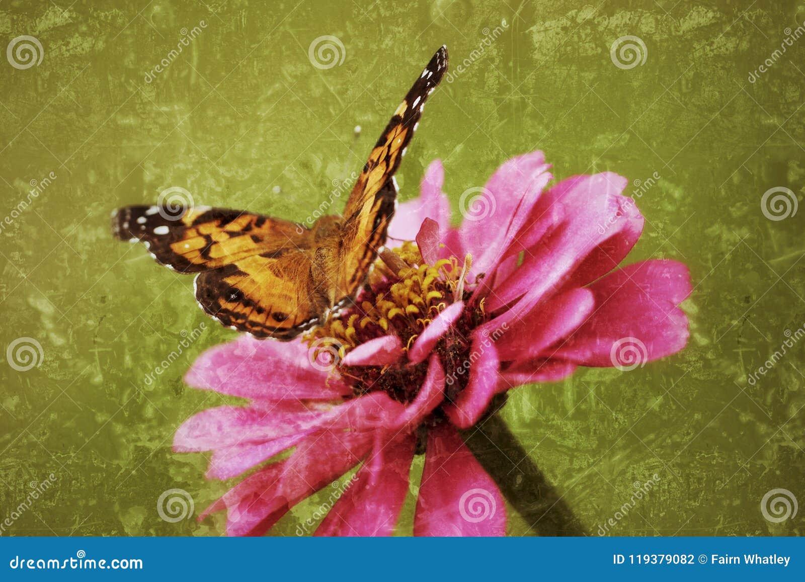 Madame peinte Butterfly s allume sur un zinnia dans une photographie antiqued