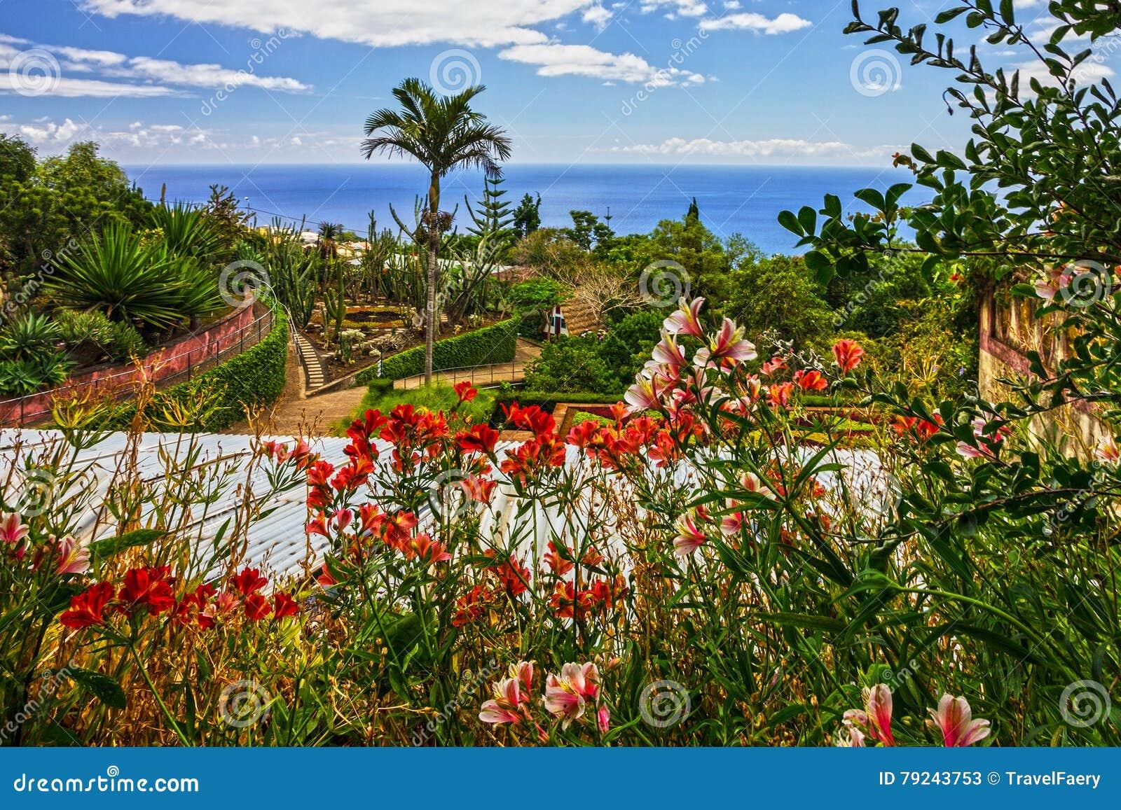 Madeira Botanischer Garten Monte Funchal Portugal Stockbild