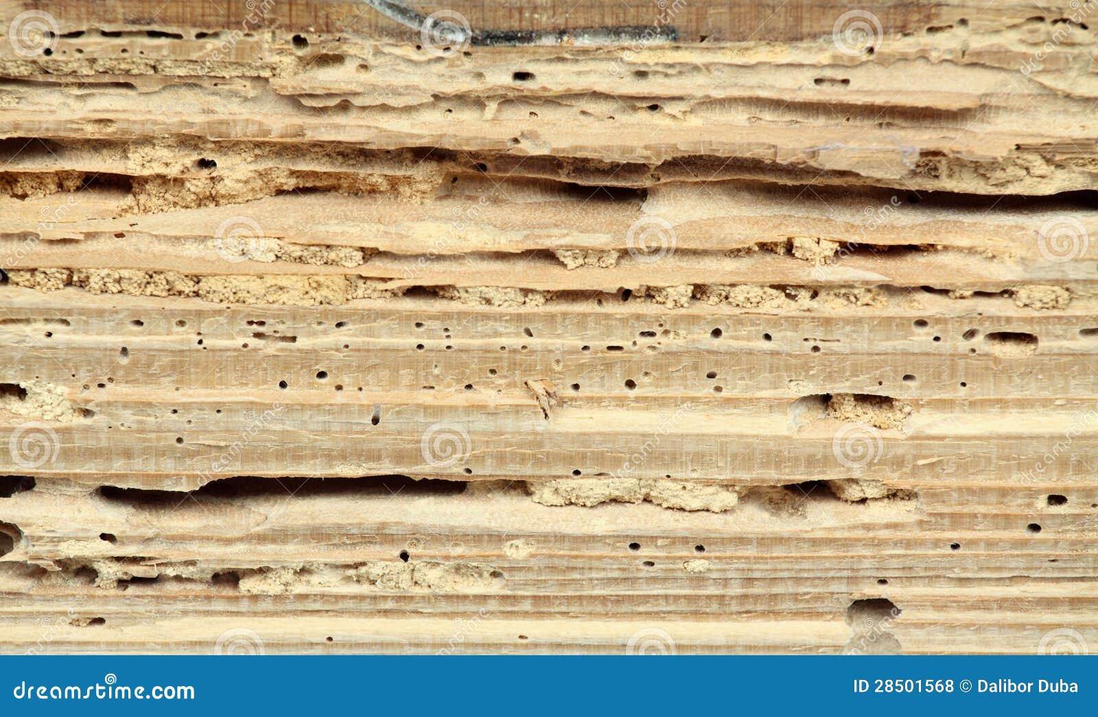 Madeira danificada pelo woodworm