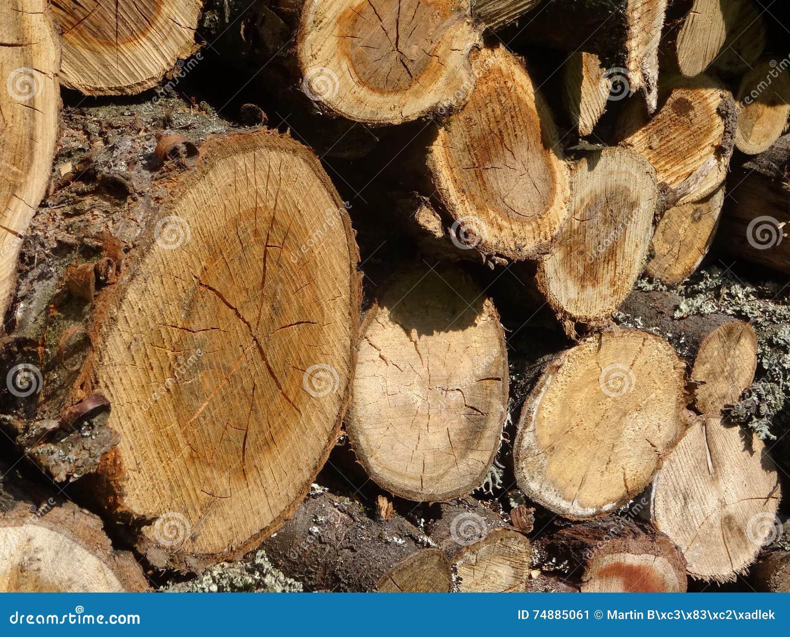 Madeira Um tronco