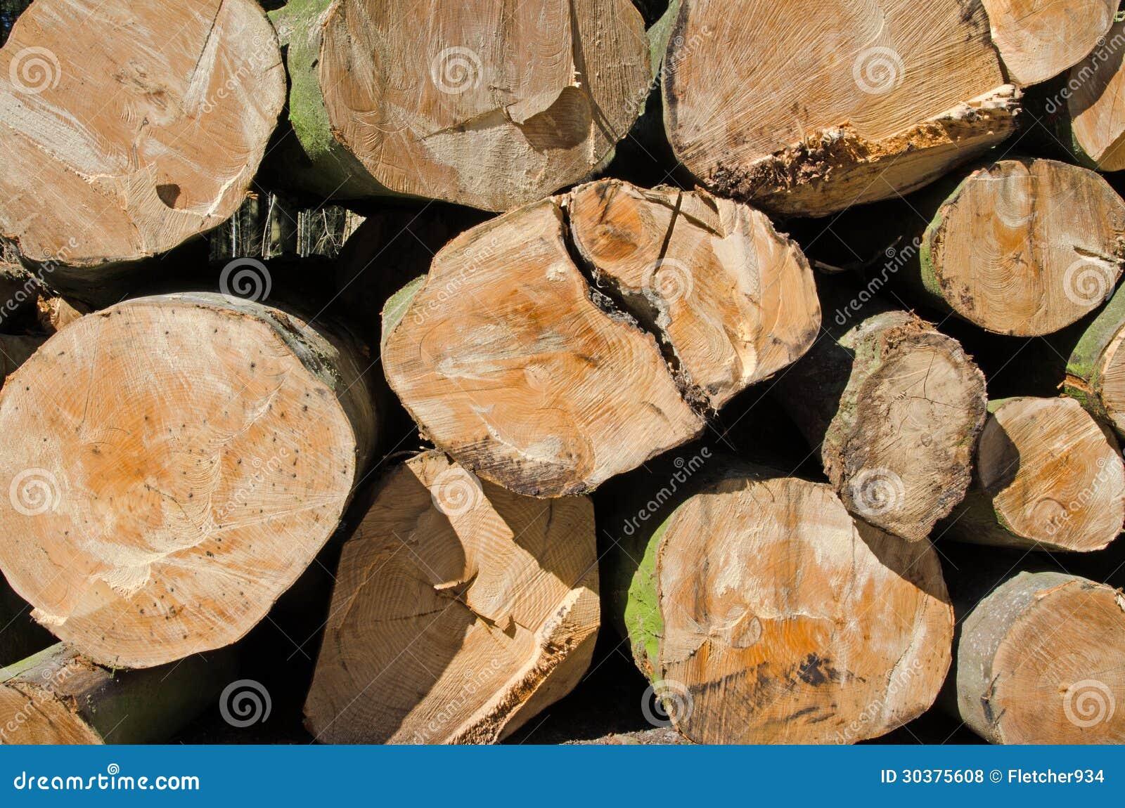 Madera del pino apilada en la yarda de madera de construcci n - Maderas del pino ...