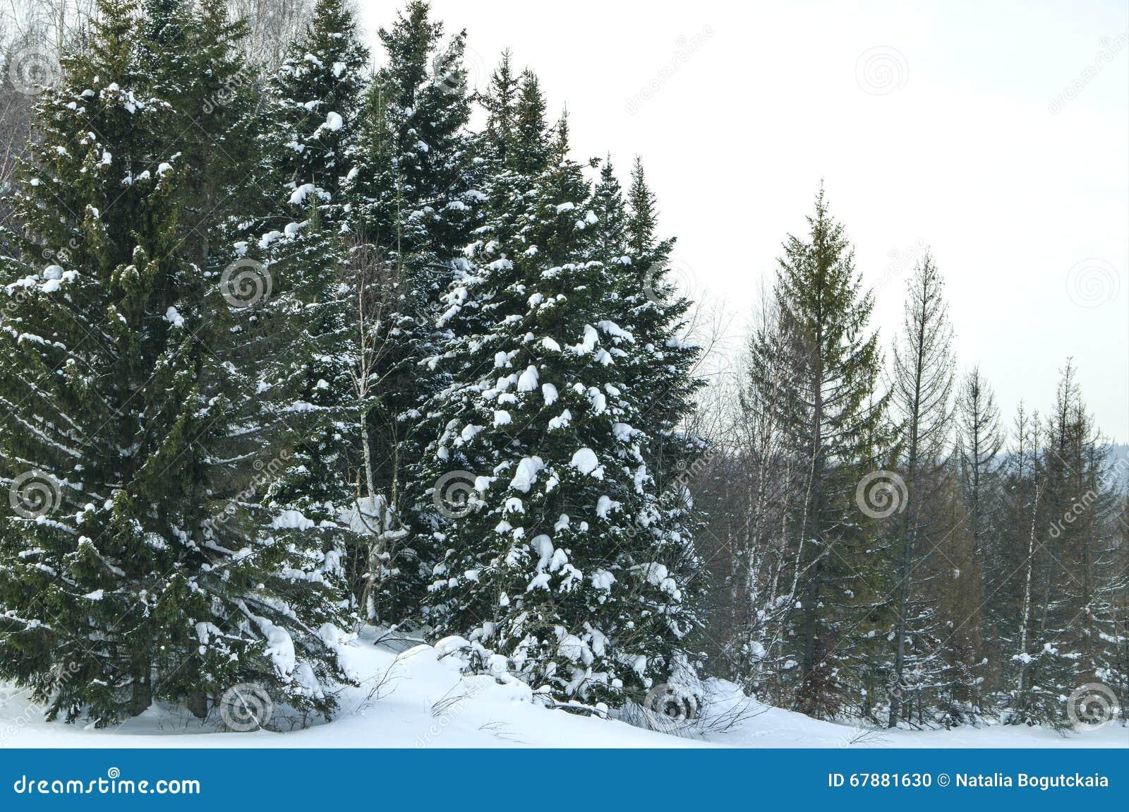 Madera en el invierno en Rusia Siberia