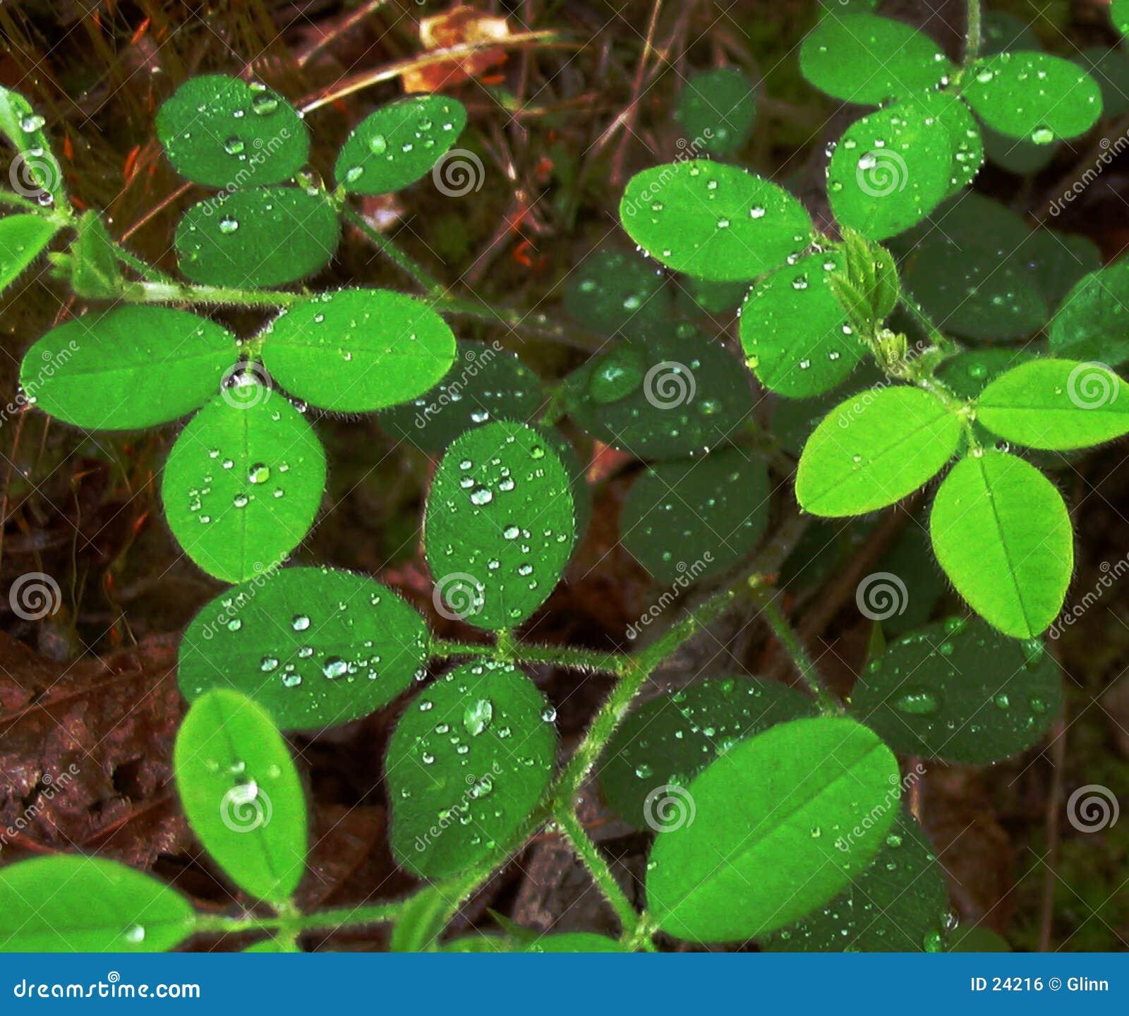 Maderas de O de las hojas