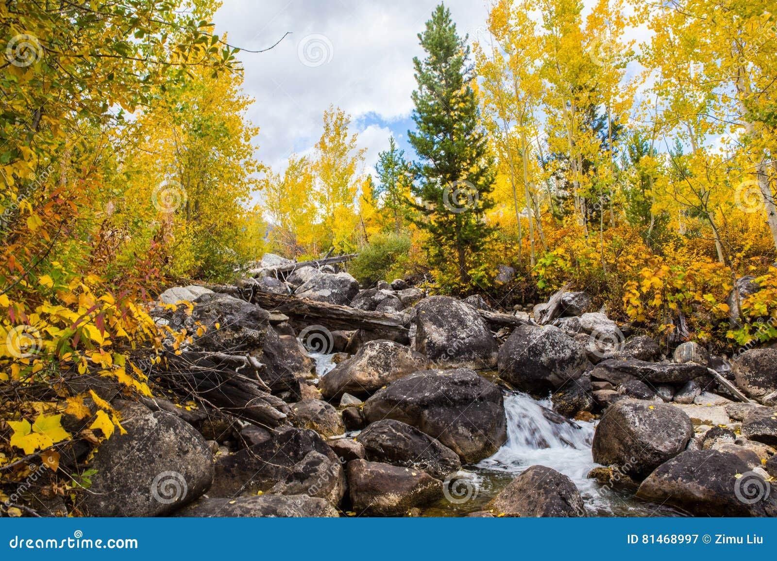 Maderas y cala del otoño