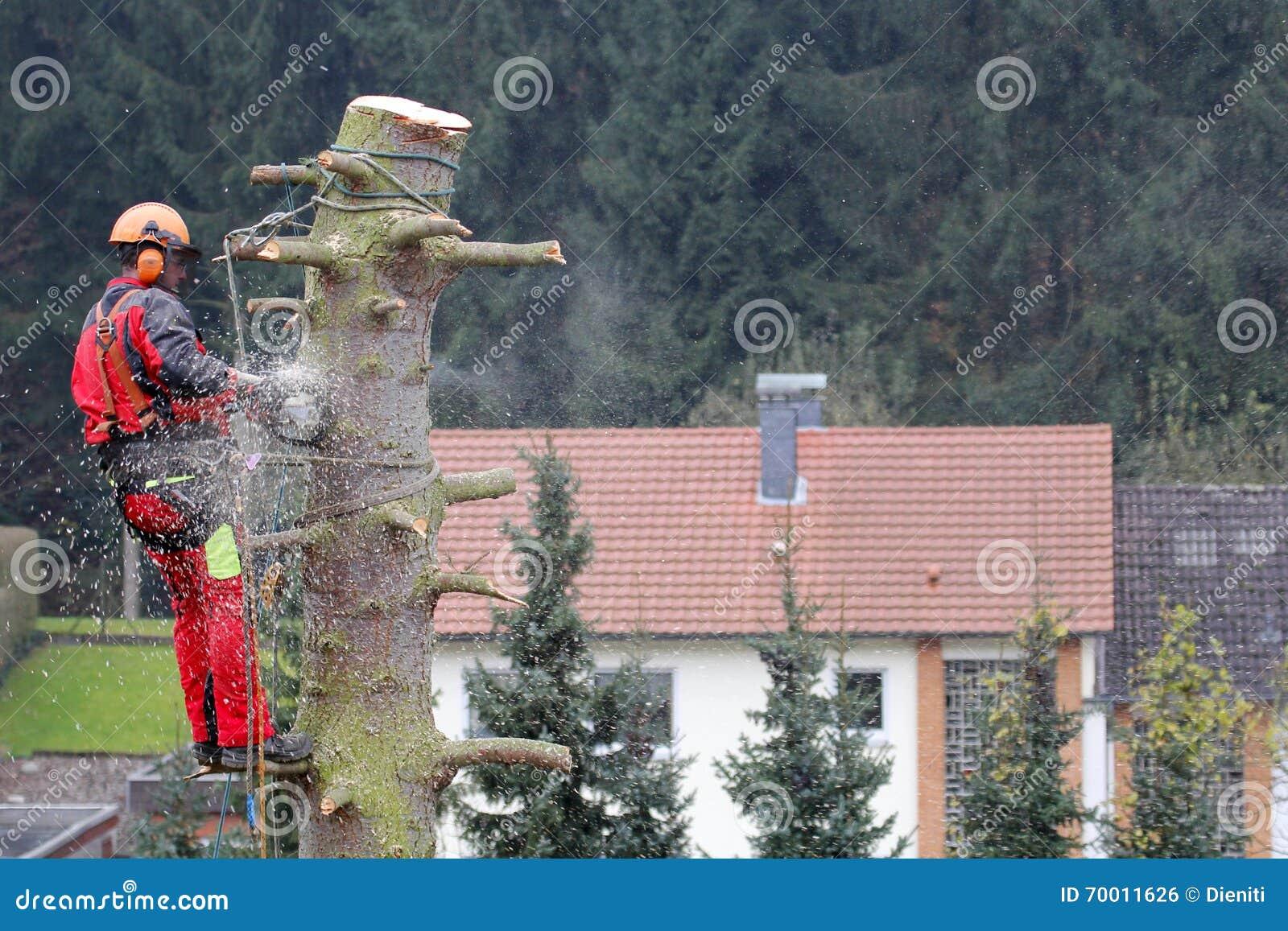 Maderero en el trabajo con la motosierra