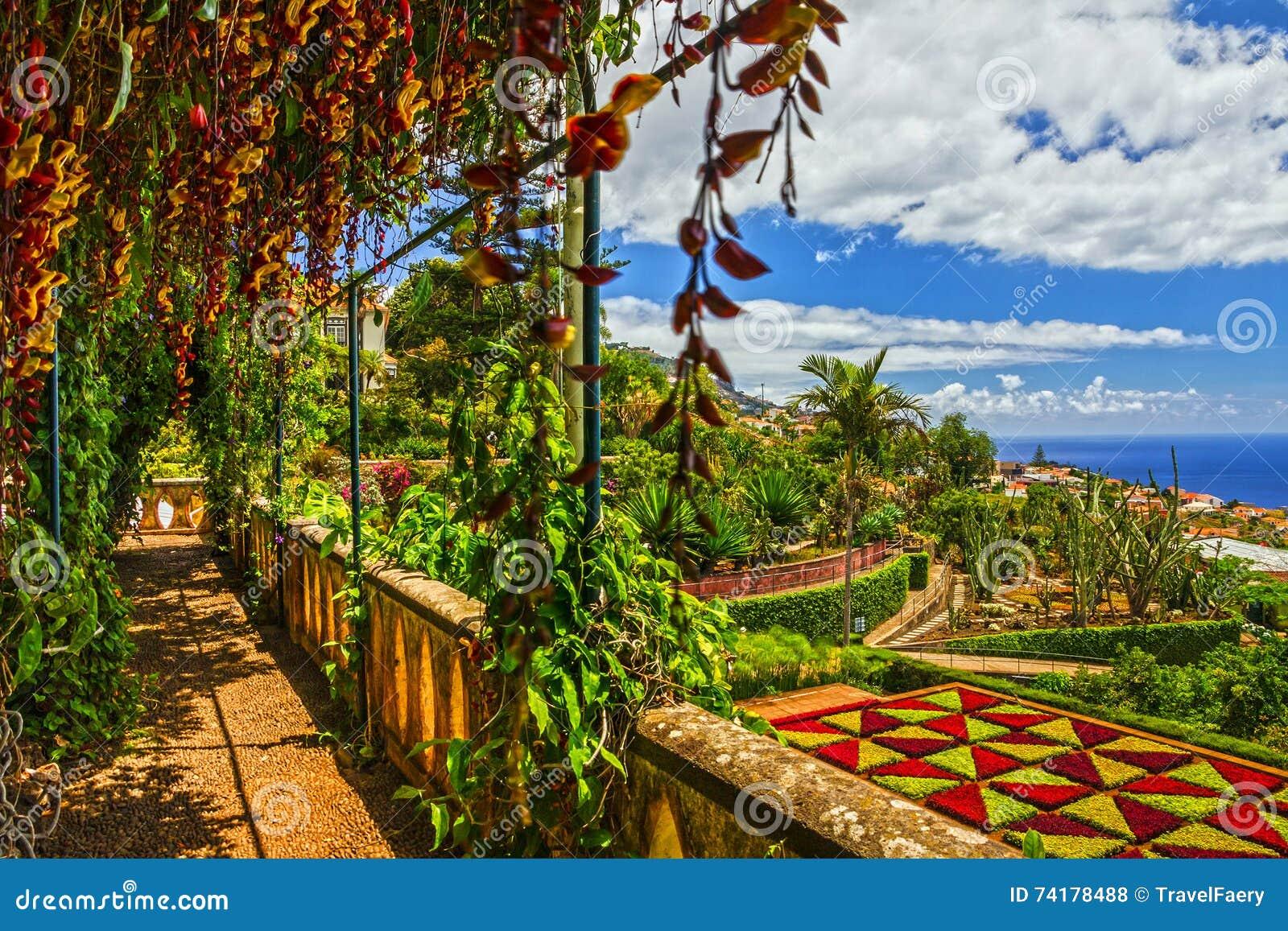 Madery wyspa, ogród botaniczny Monte, Funchal, Portugalia