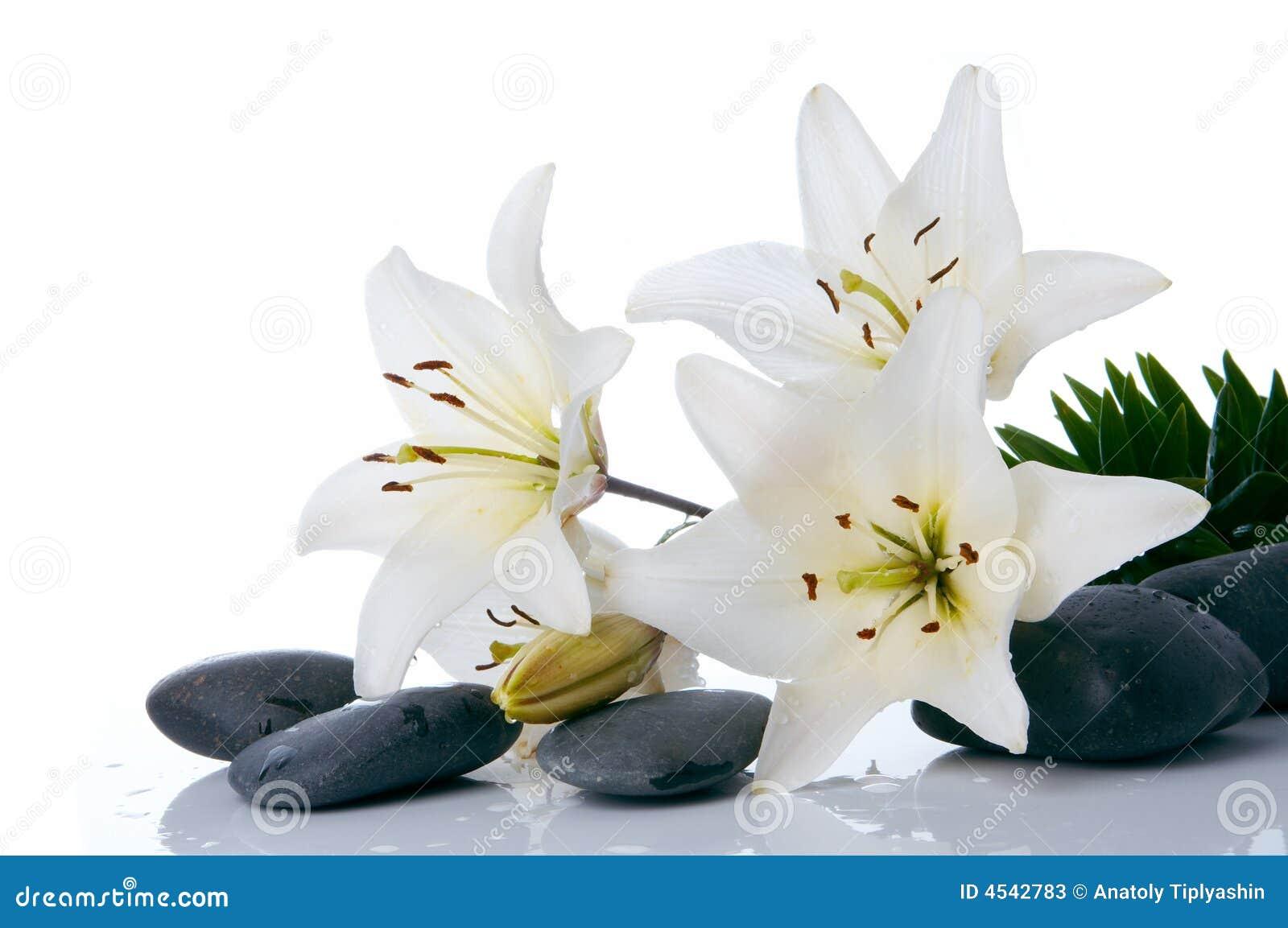 madonna lilien mit badekurortstein stockfotos bild 4542783. Black Bedroom Furniture Sets. Home Design Ideas
