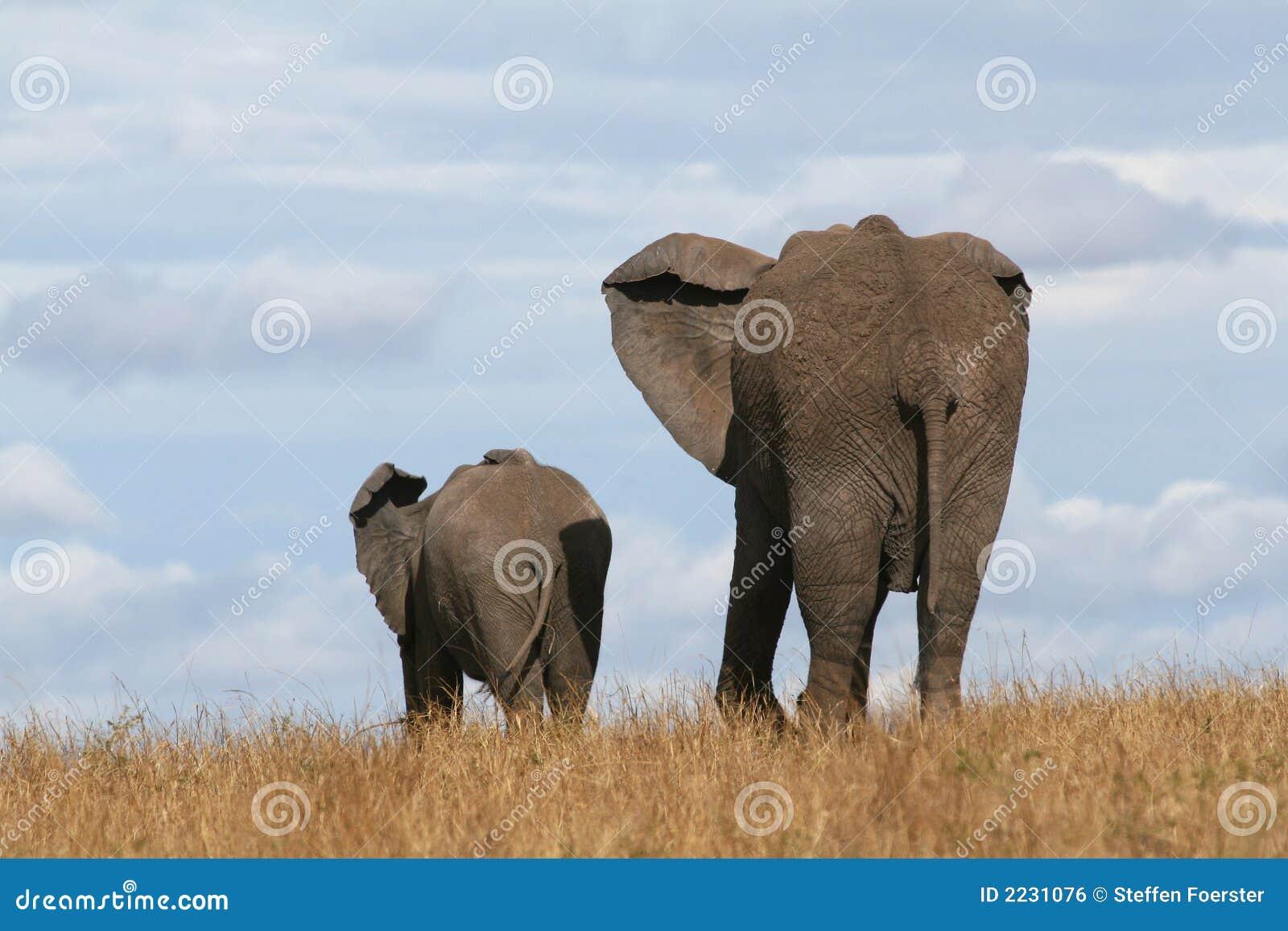 Madre y becerro del elefante