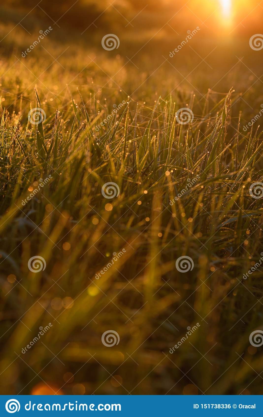Madrugada en las extremidades de la hierba