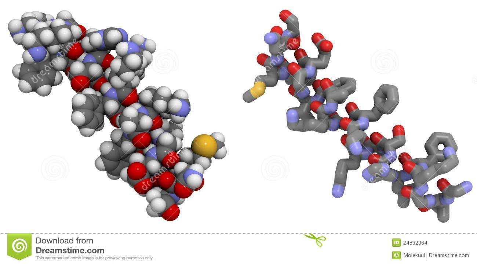 Magainin 2 Peptide Molecule Stock Illustration ...