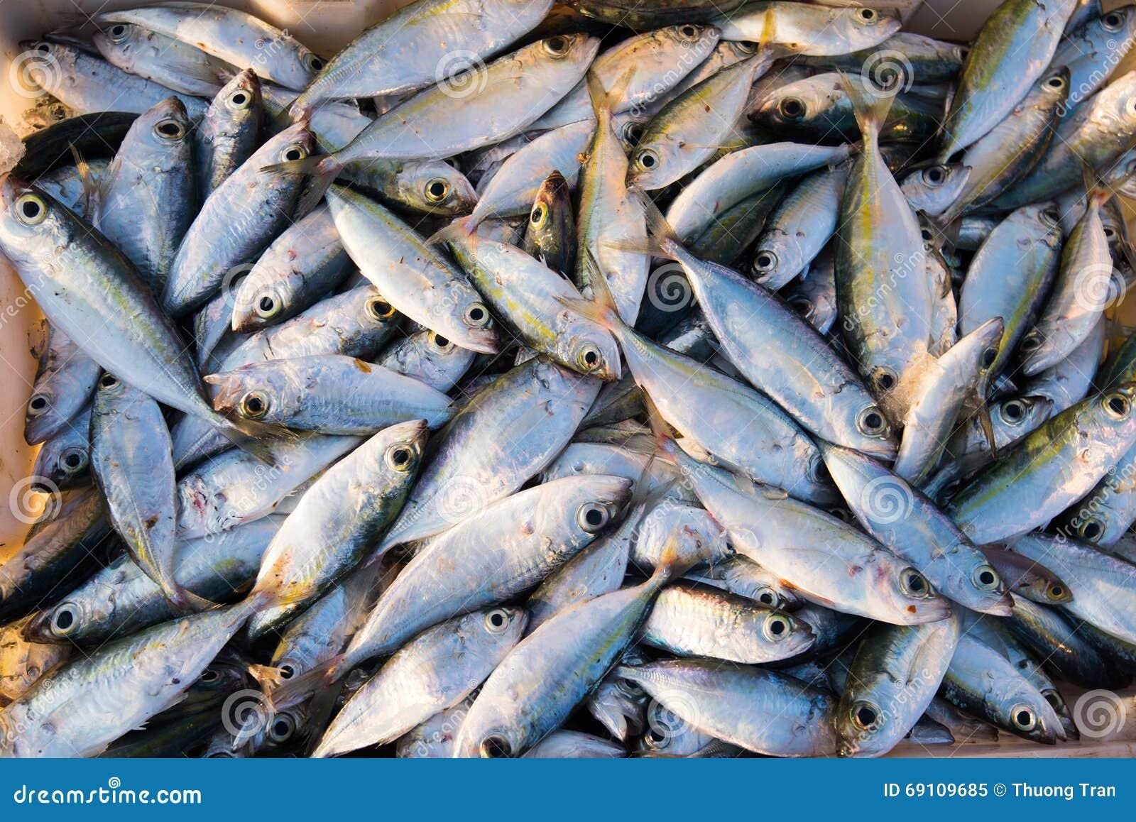 Magasin av rå fiskar