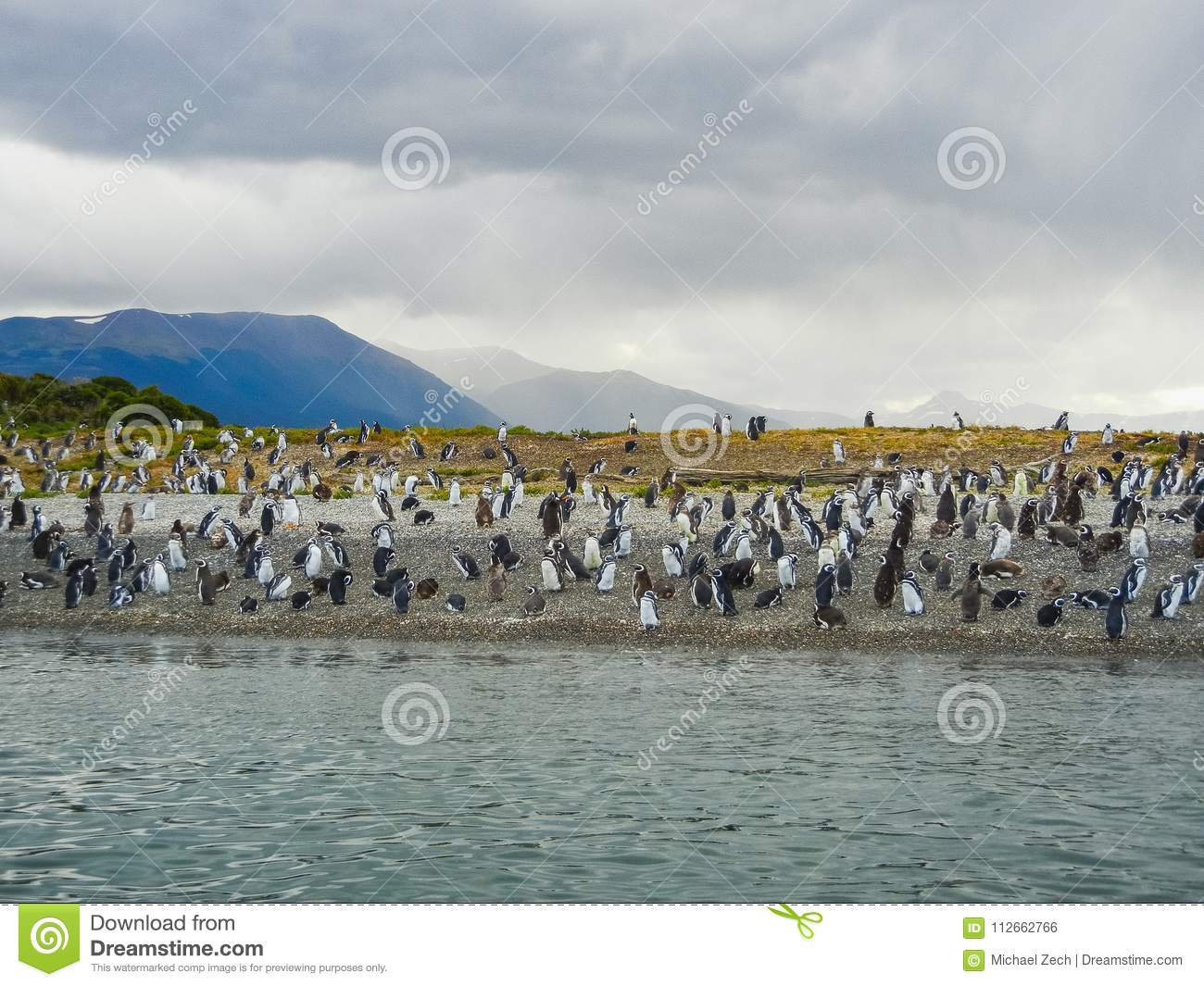 The magellanic penguins on the islands of tierra del fuego patagonia