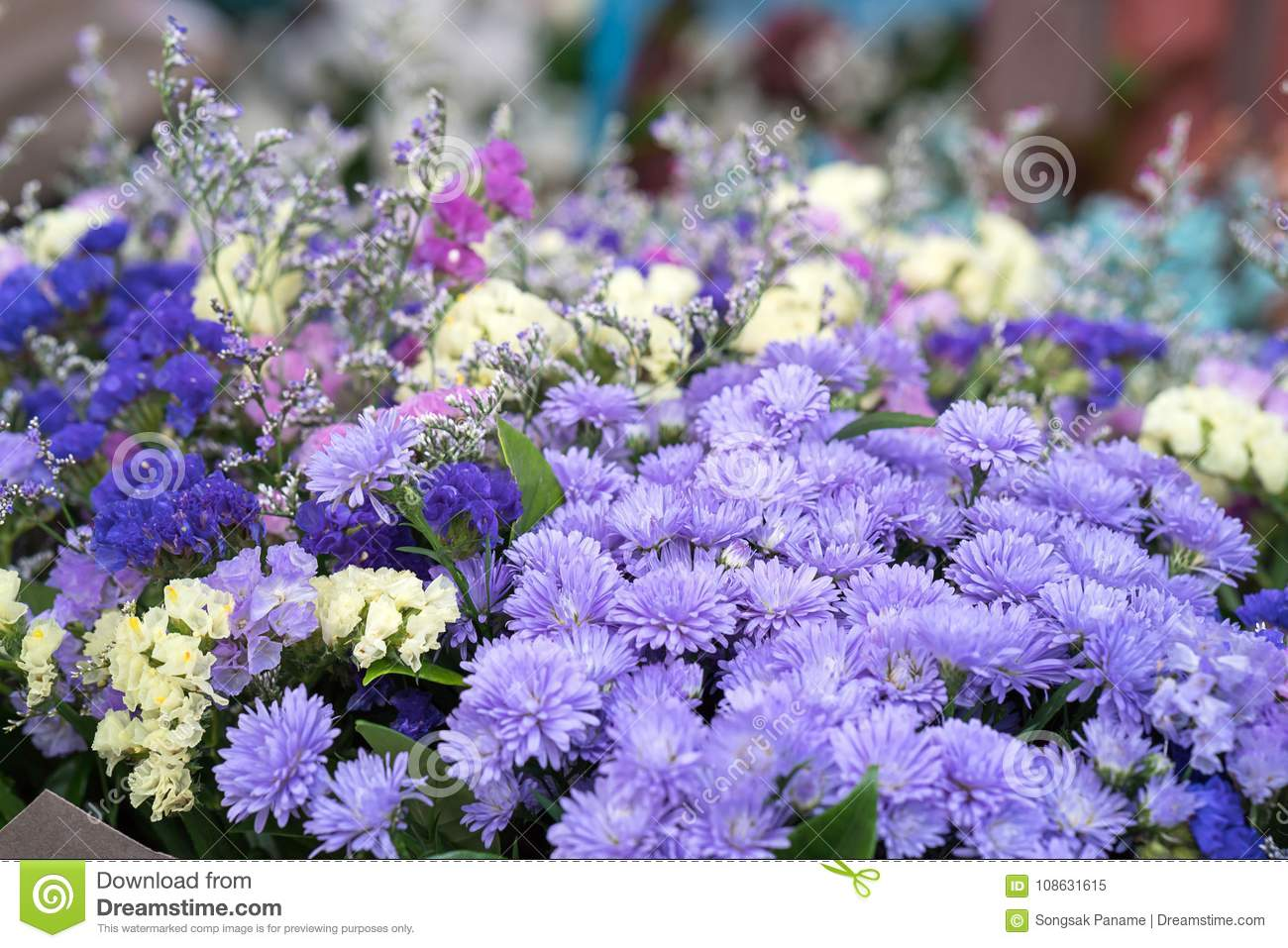 Magenta asters flower bouquet stock image image of magenta head download magenta asters flower bouquet stock image image of magenta head 108631615 izmirmasajfo
