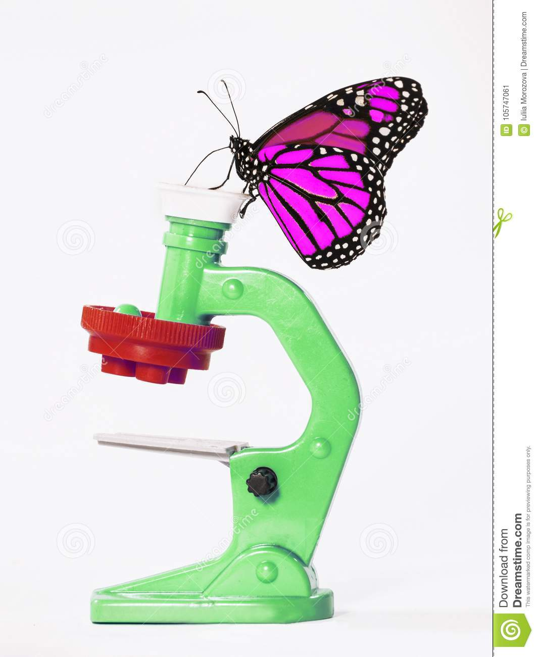 A magenta monarch butterfly on a toy microscope