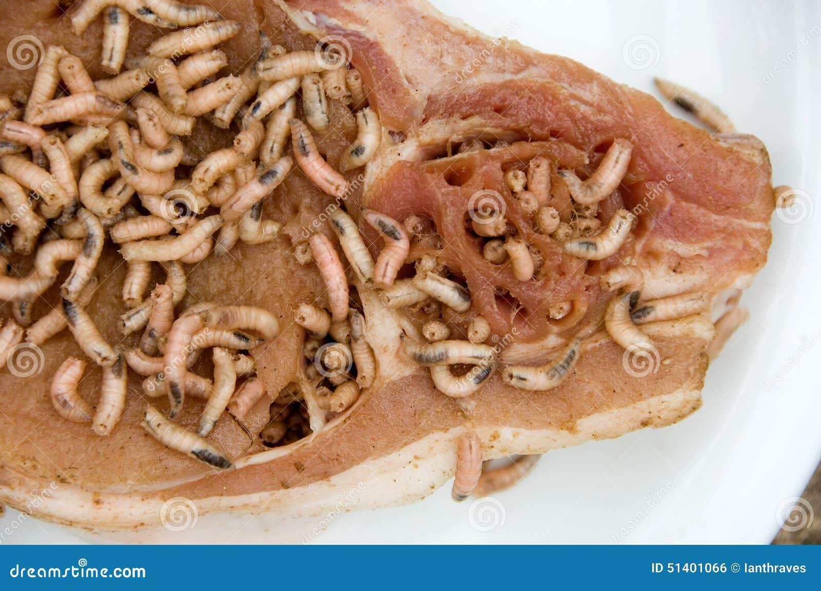 Maggots On Pork Chop Stock Photo - Image: 51401066