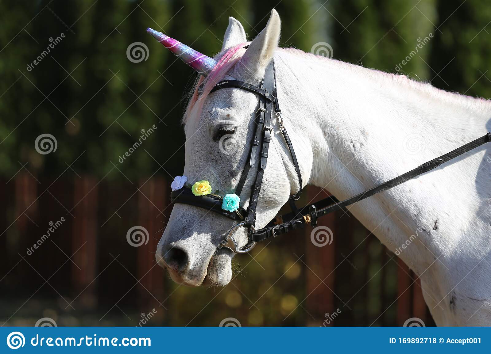 Beautiful Magical Unicorn Horse Realistic Photography Stock Photo Image Of Bright Beauty 169892718