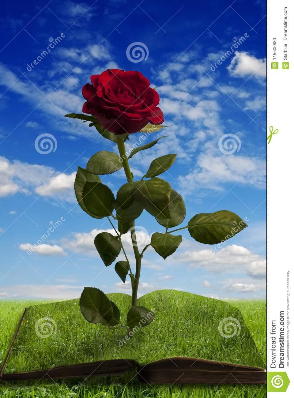 Magic book with a rose in summer landscape