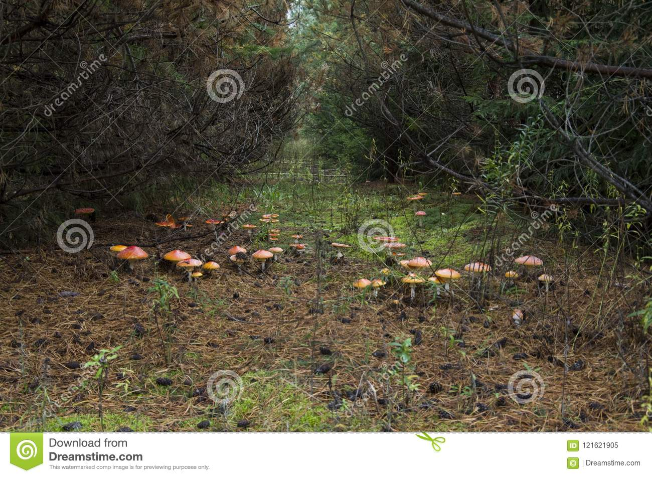 Magic forest stock image  Image of meet, trees, like - 121621905