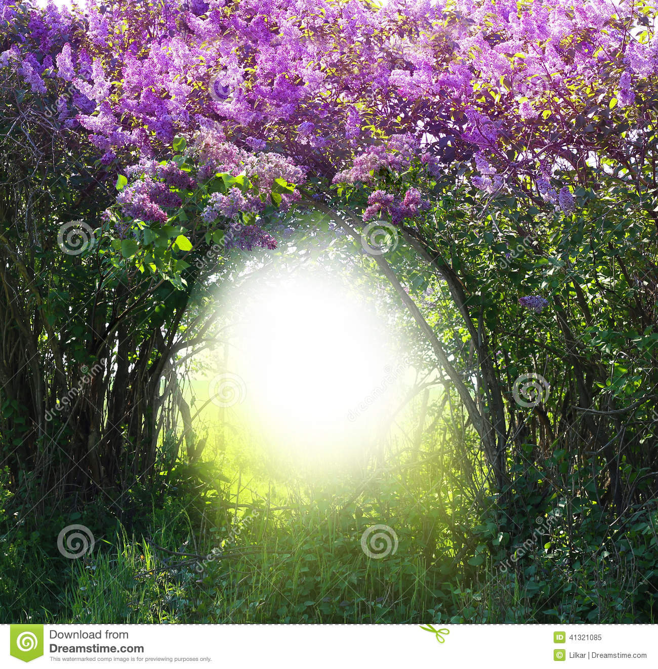 Magic Spring Forest Landscape Stock Image - Image of ...