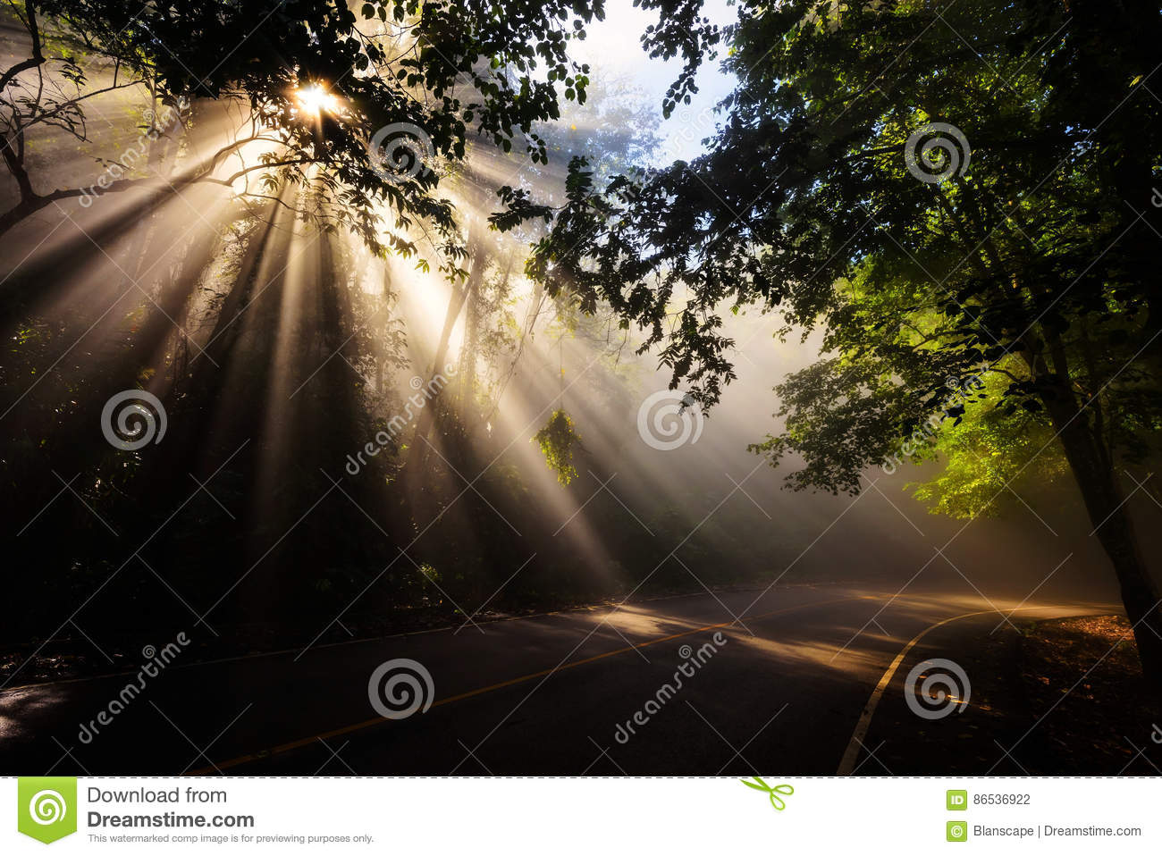 Magical forest with light rays