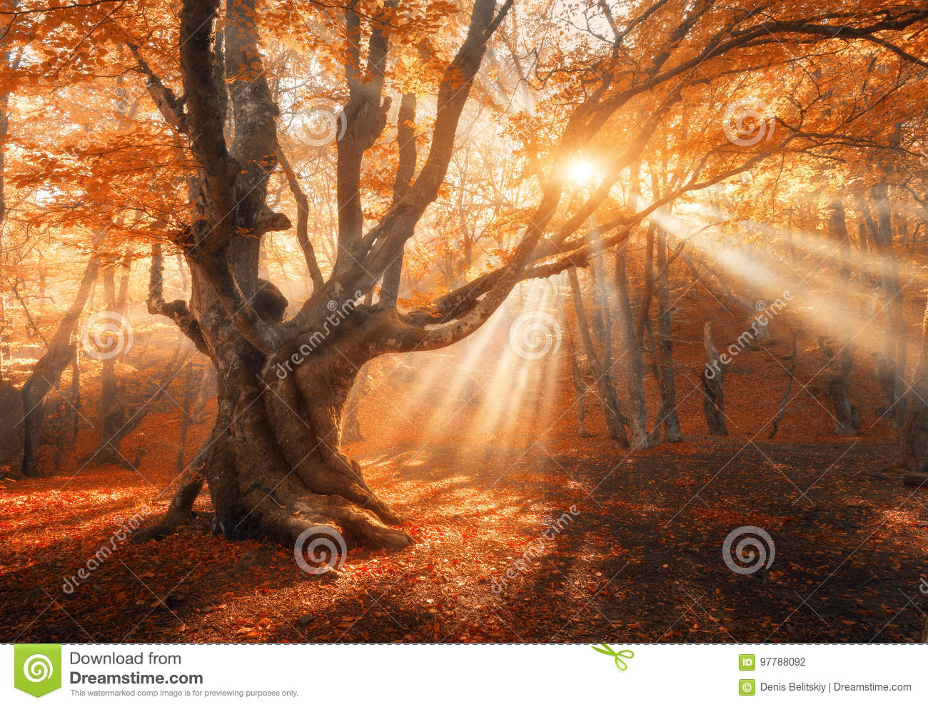 Magical old tree with sun rays in the morning