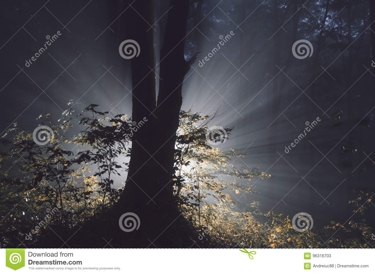 download magical tree in mysterious forest on halloween night stock image image of scary