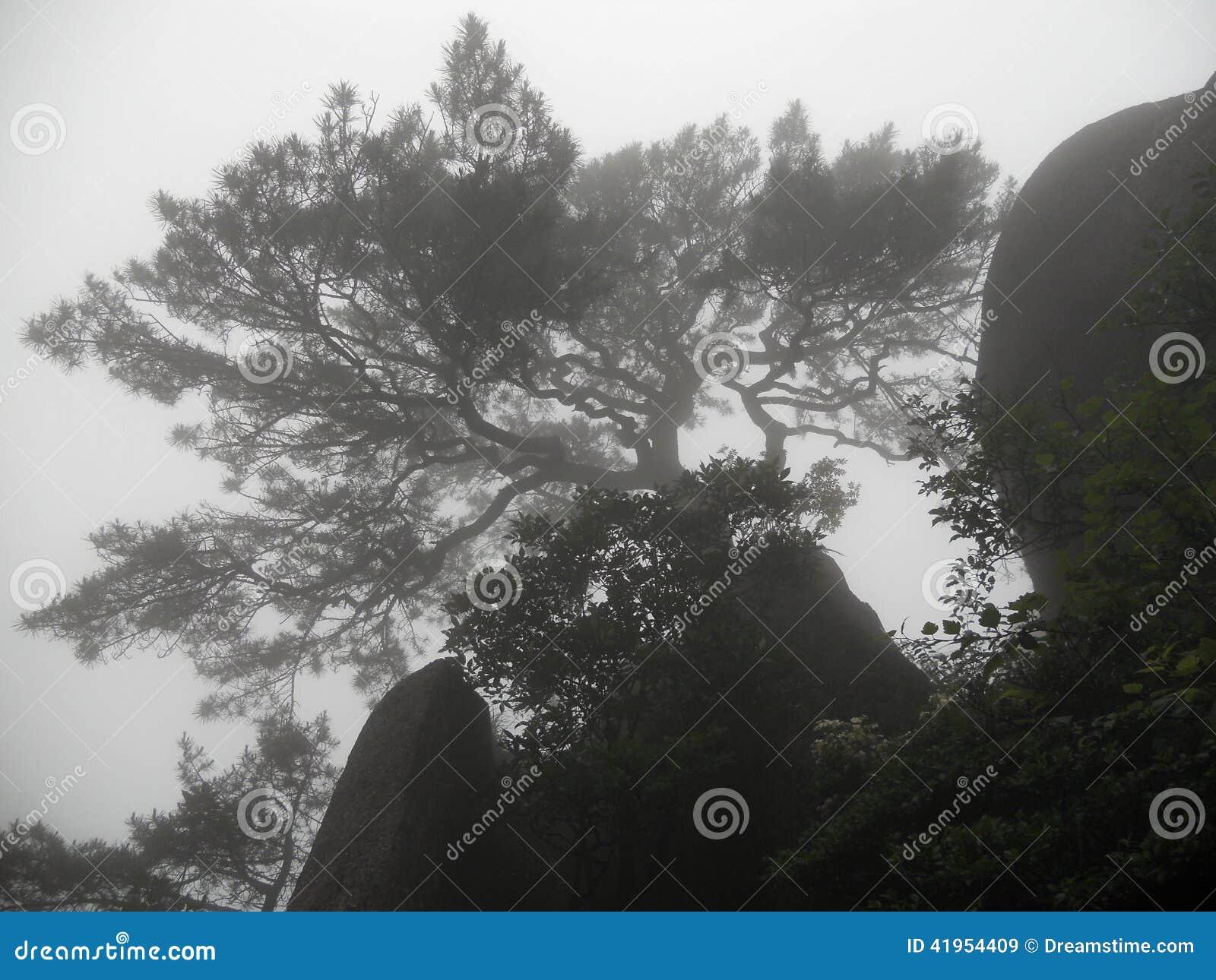 Magiczny drzewo na górze