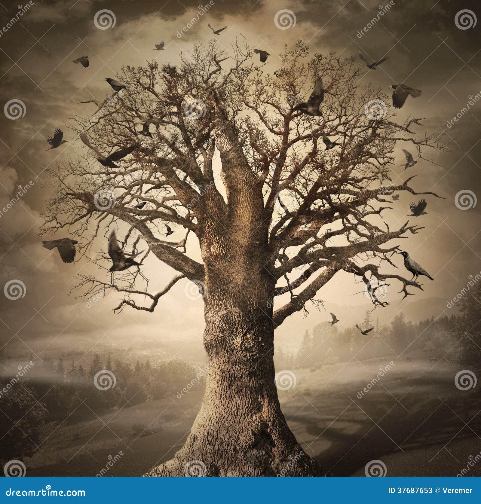 Magiczny drzewo z wronami