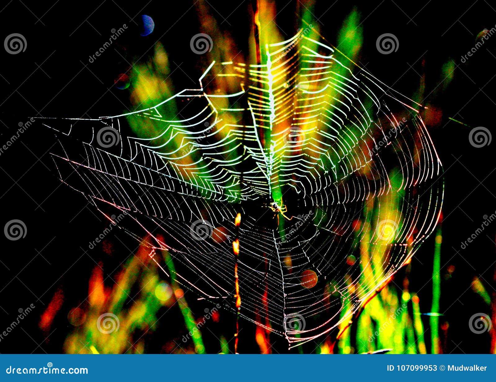 Magiczny pająk sieci tło