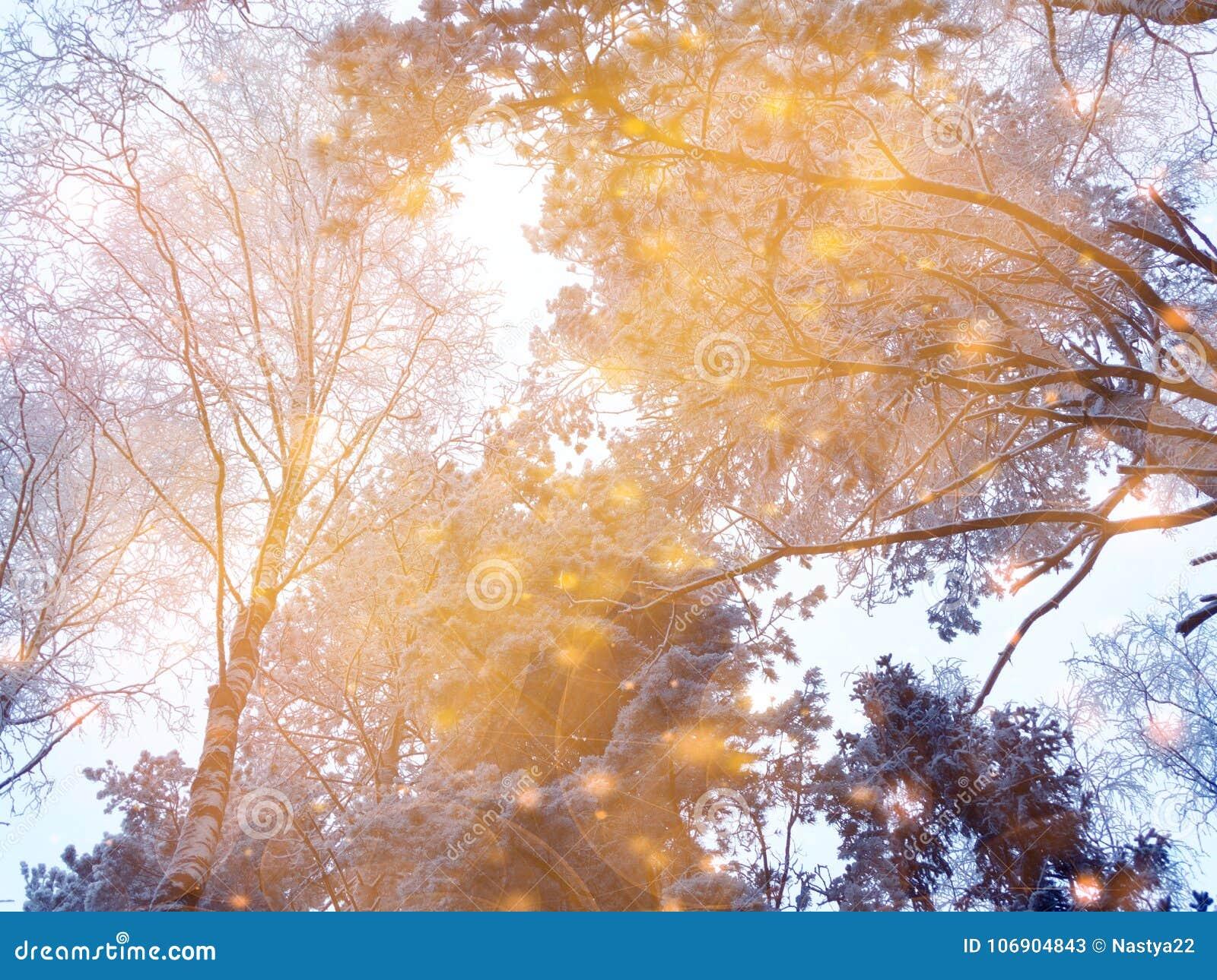 Magiczny zima krajobrazu las w śniegu oszroniejącym z bożonarodzeniowe światła