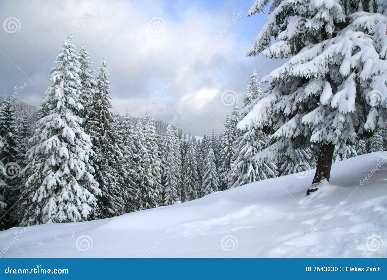 Magisch de winterhout dat met verse sneeuw wordt behandeld