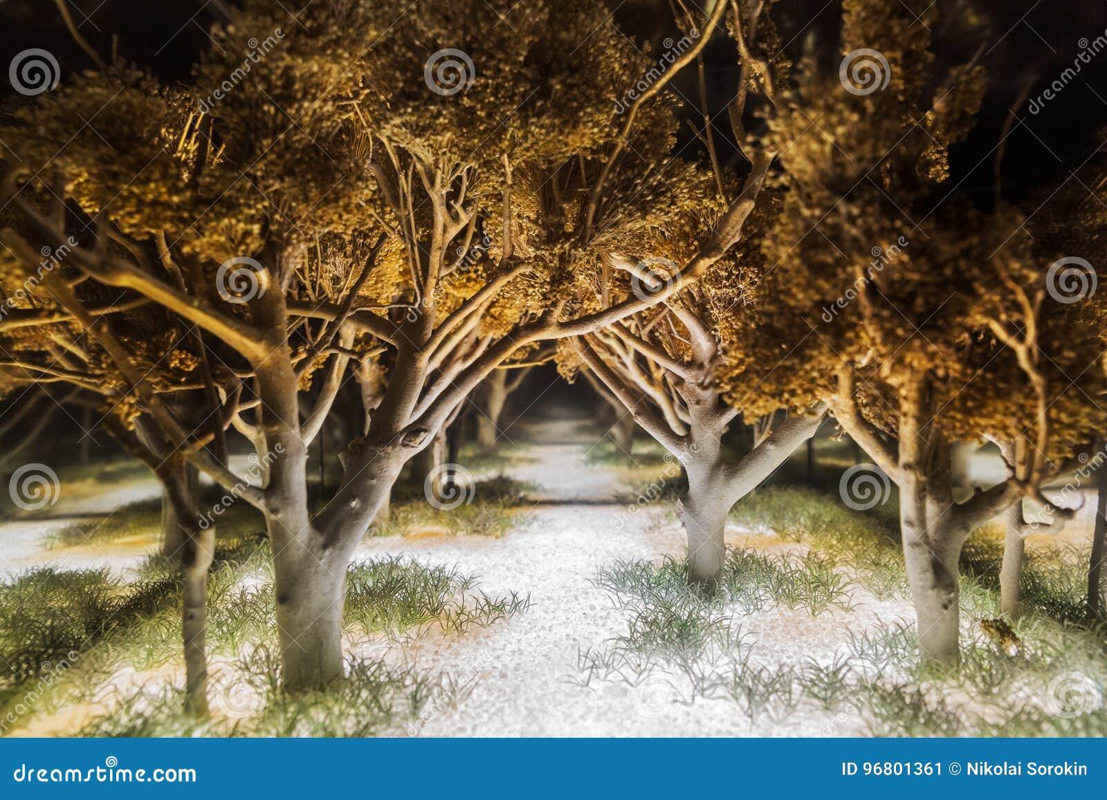 Magisch donker bos