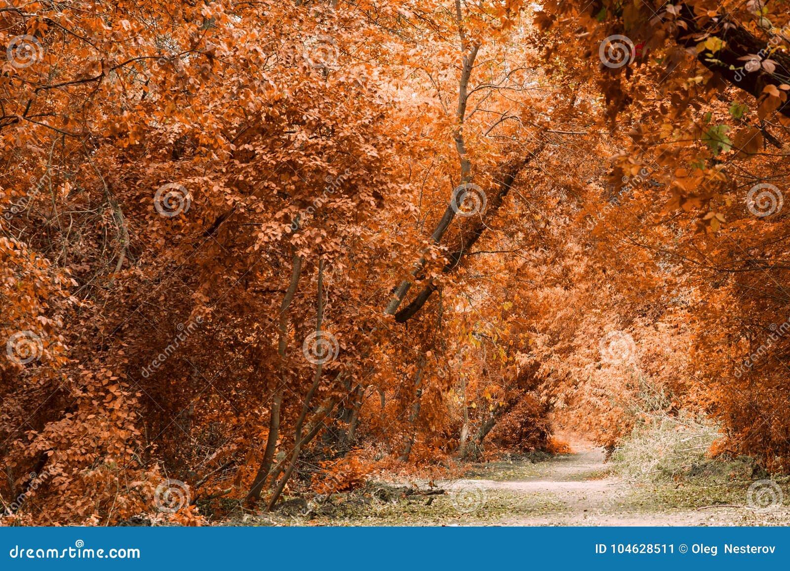 Download Magische De Herfstachtergrond Met Helder Gekleurde De Herfstbladeren Stock Afbeelding - Afbeelding bestaande uit d0, gebladerte: 104628511