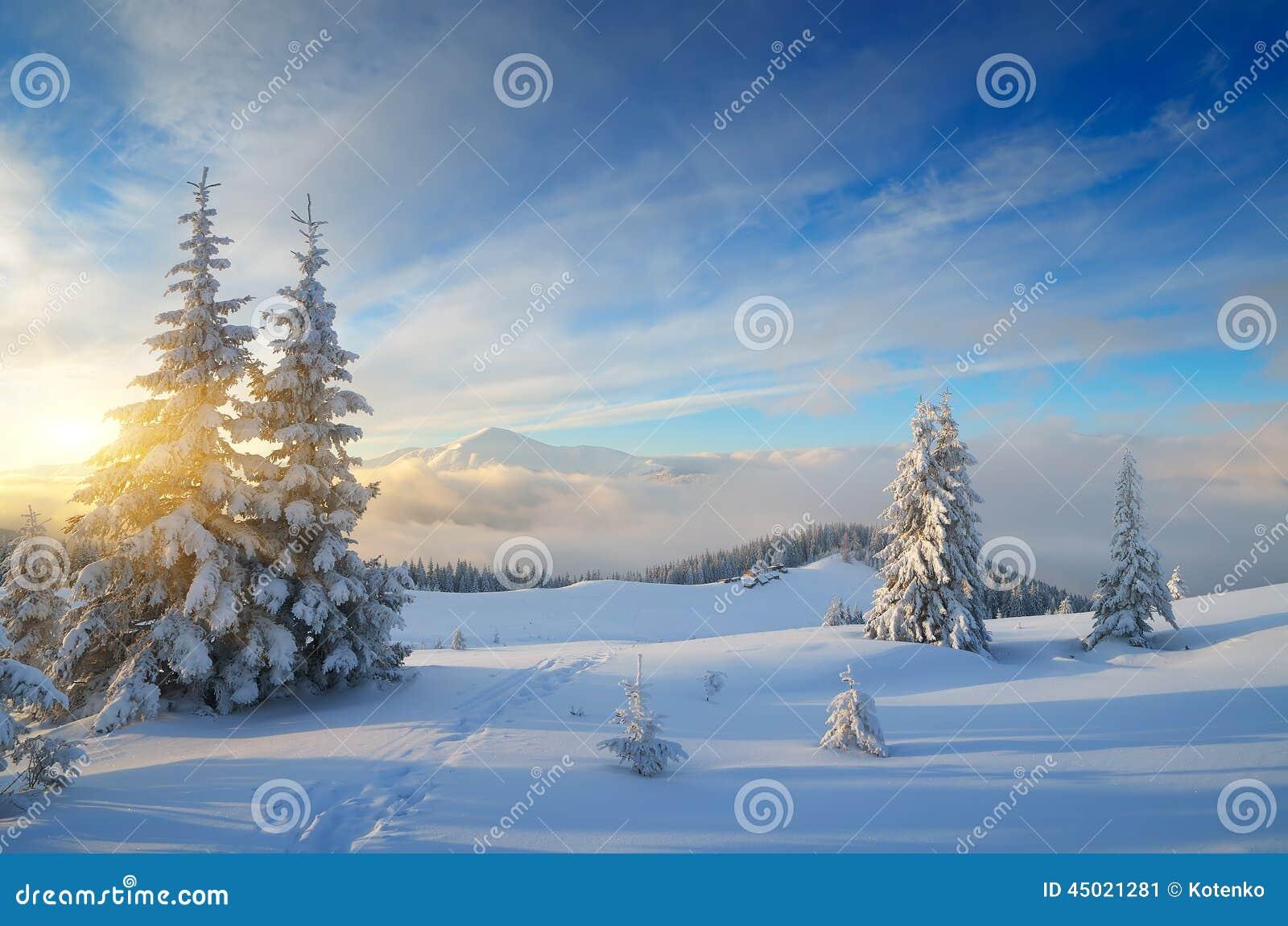 magische nacht von weihnachten stockfoto bild 45021281. Black Bedroom Furniture Sets. Home Design Ideas
