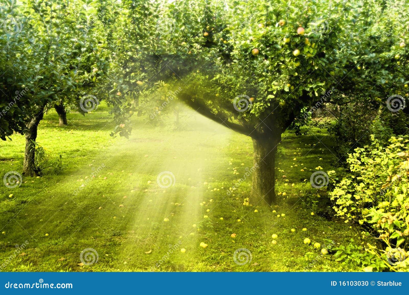 De Magische Tuin : Magische tuin stock foto afbeelding bestaande uit magisch