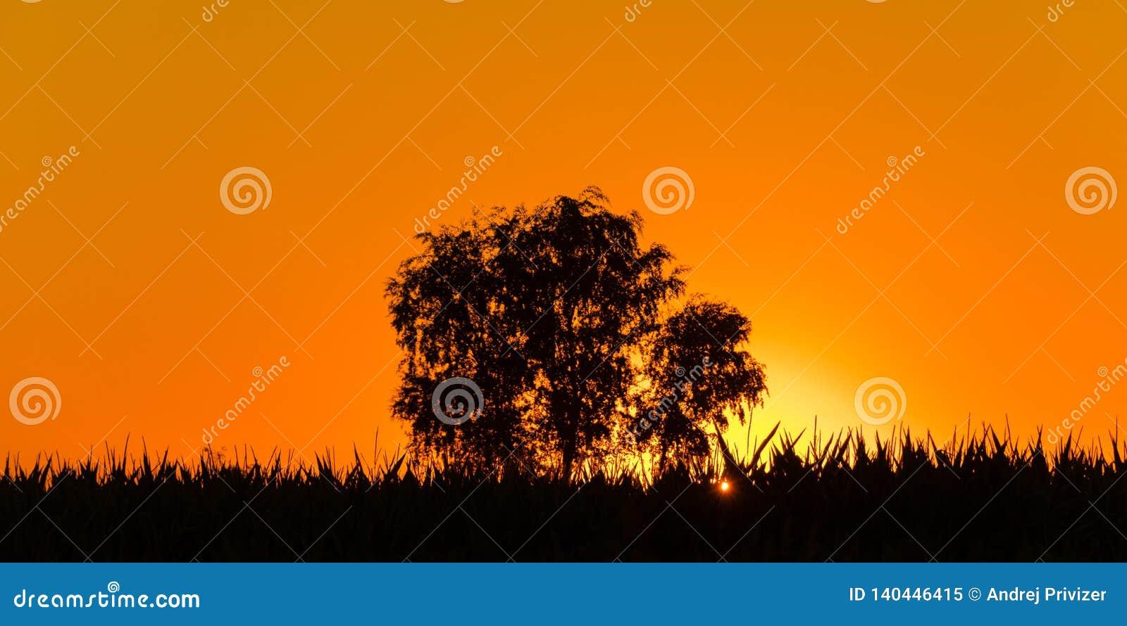 Magische zonsopgang met één enkele boom in Servië