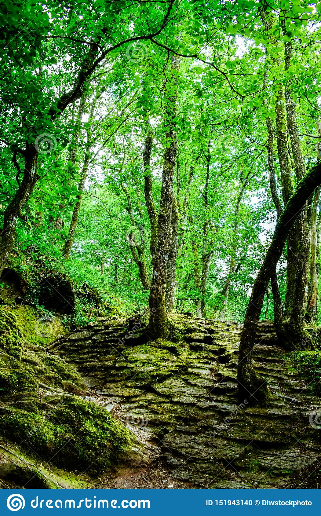 Magischer Wald von Brocéliande, Frankreich