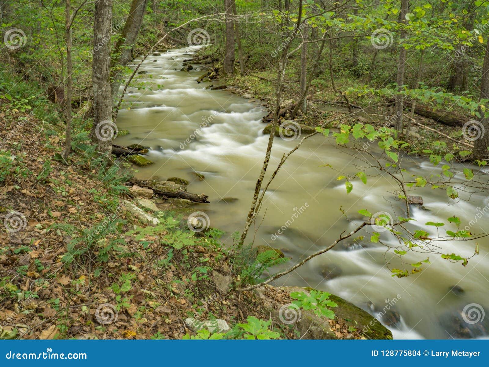 Magisches Virew am Brüllen des Laufnebenflusses und des Waldes