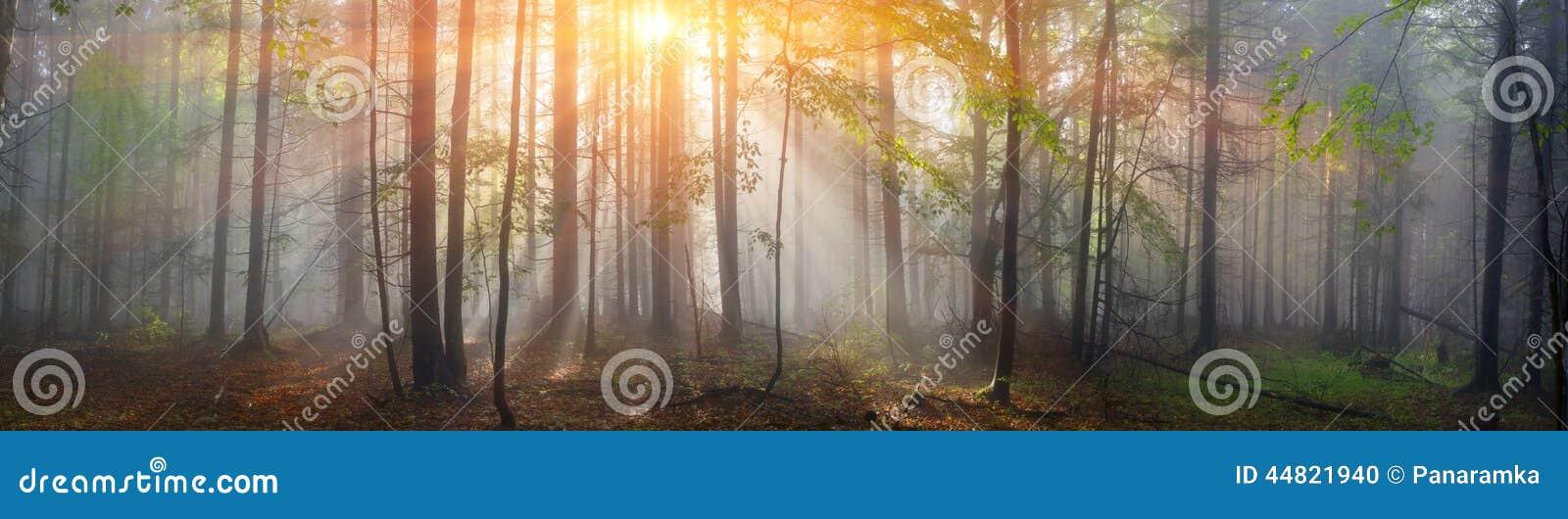 Magisk Carpathian skog på gryning
