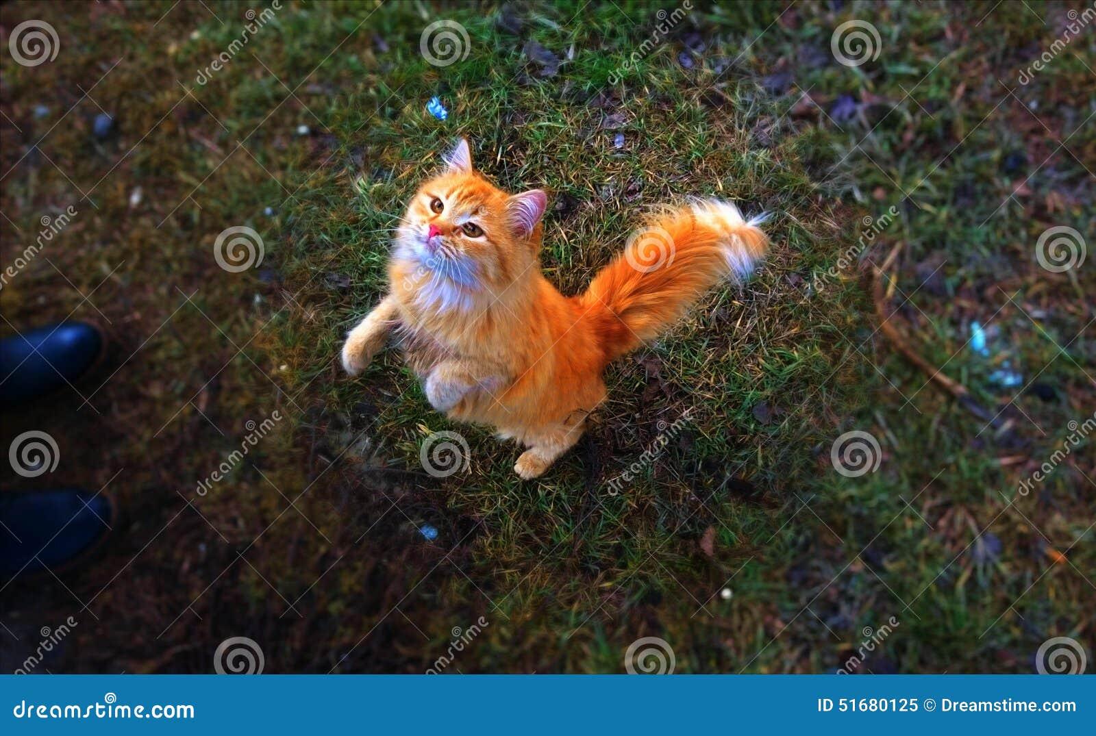 Magisk färgrik värld med en magisk katt
