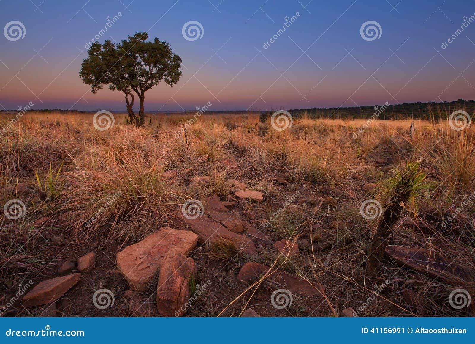 Magisk solnedgång i Afrika med ett ensamt träd på en kulle och louds